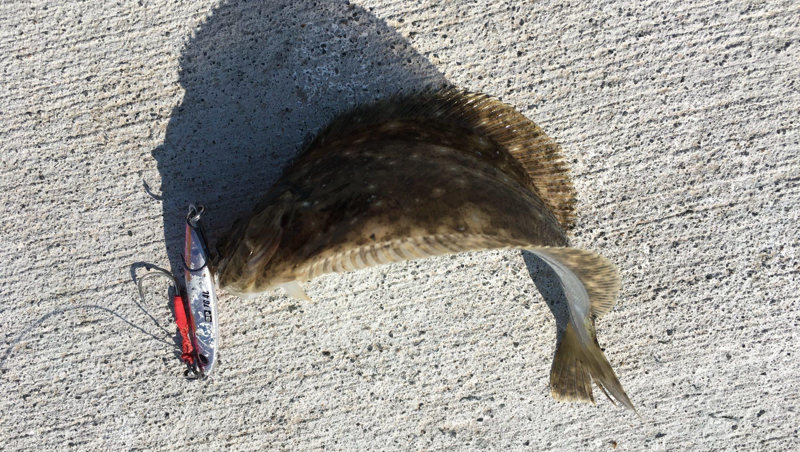 ジグパラTGで釣れたソゲの写真