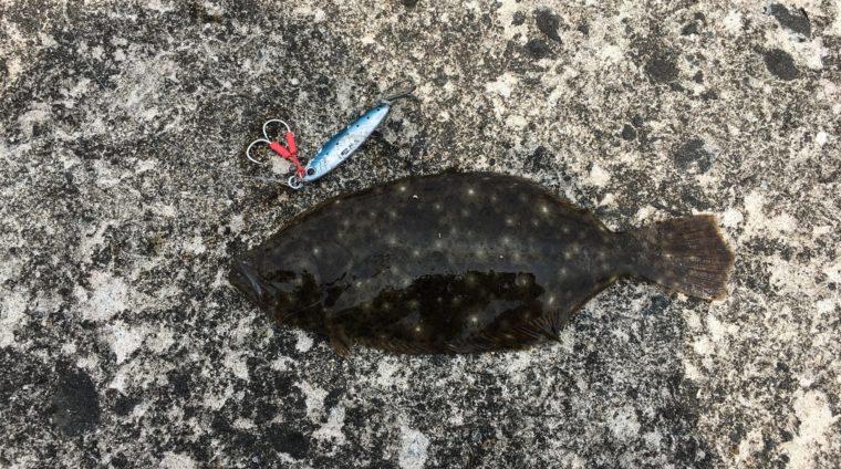 メジャークラフト|ジグパラTG|イワシカラーで釣れたヒラメの写真