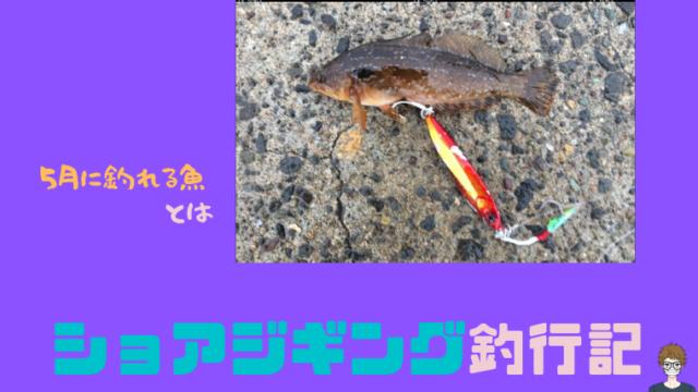 5月にショアジギング釣行の記事のアイキャッチ画像