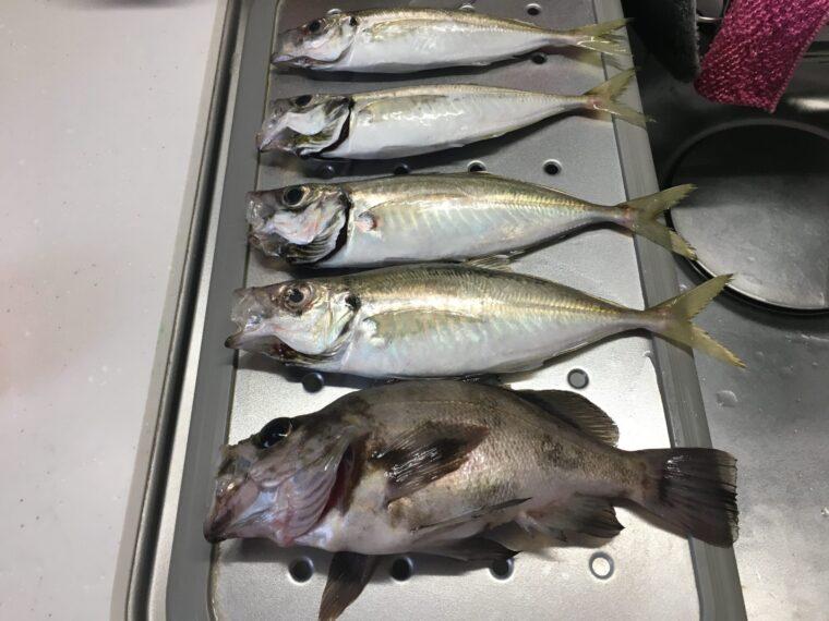 秋田北防波堤で釣ったアジとメバル